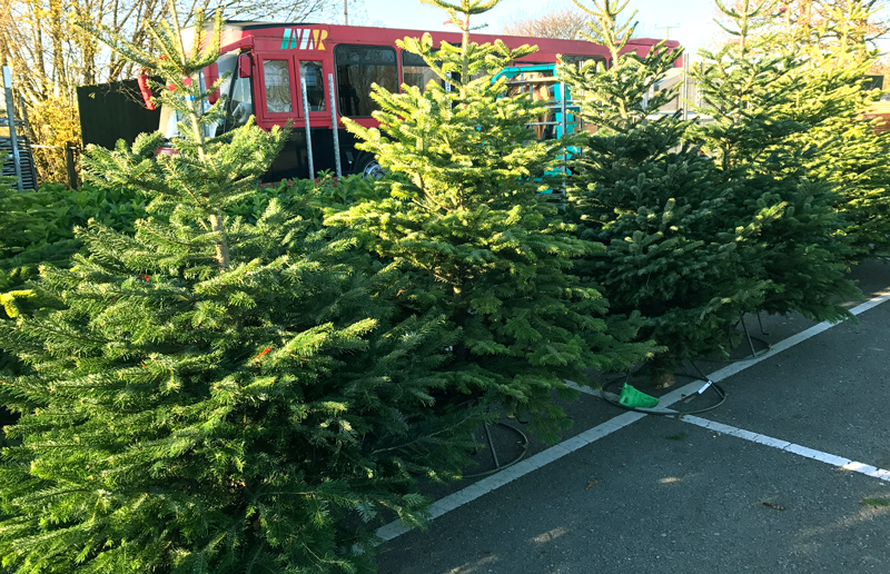 Christmas Trees 2019